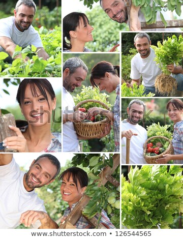 Stock fotó: Collage Of A Couple In Their Garden