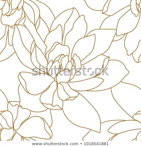Rosas damasco romántica oscuro Foto stock © ElaK