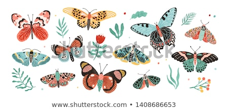 Сток-фото: Flowers And Butterfly Elements For Design Vector Illustration
