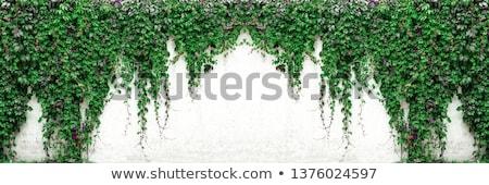 Virgínia · escalada · planta · outono · casa · edifício - foto stock © serge001