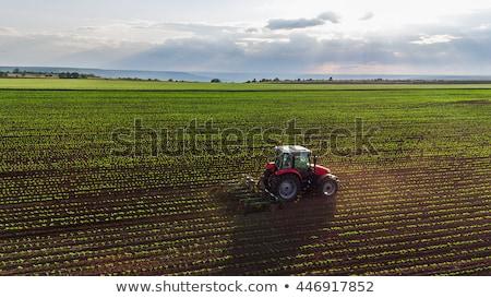 Traktör alan mavi gökyüzü iş doğa çiftlik Stok fotoğraf © deyangeorgiev