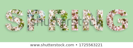 springtime collage of fresh flowers stock photo © julietphotography