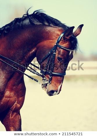 Corrida de cavalos estável nascer do sol pronto cavalo raça Foto stock © epstock