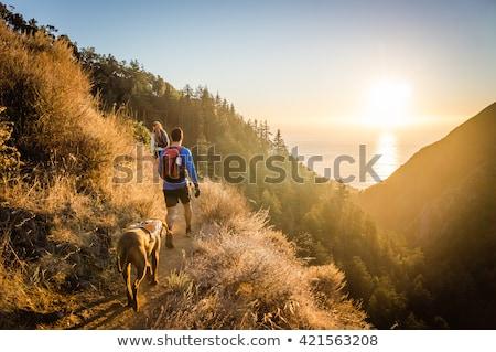 cão · caminhadas · trio · montanhas · natureza · montanha - foto stock © ivonnewierink