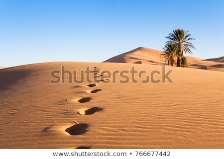 footprint on sand dune in desert Stock photo © Mikko