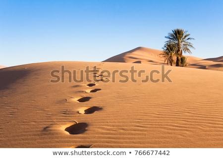 砂 · 砂漠 · リップル · スカラベ · 足跡 · 夏 - ストックフォト © mikko