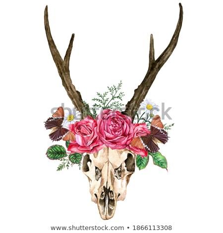 fallow deer skull stock photo © tony4urban