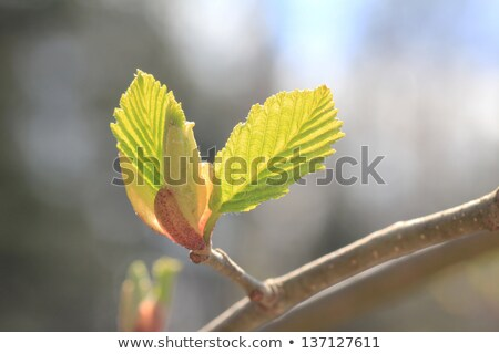 Broto árvore primavera madeira natureza chave Foto stock © Arrxxx