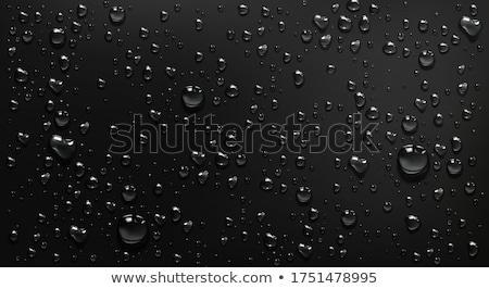 черный капли воды макроса красивой темно мелкий Сток-фото © ArenaCreative