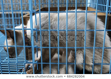Siamese mother cat with kitten in cage Stock photo © ivonnewierink