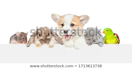 dog, cat and mouse Stock photo © silense