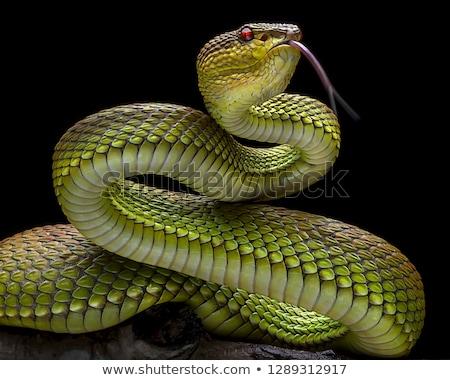 Venenoso verde retrato olhos natureza Foto stock © Kirill_M