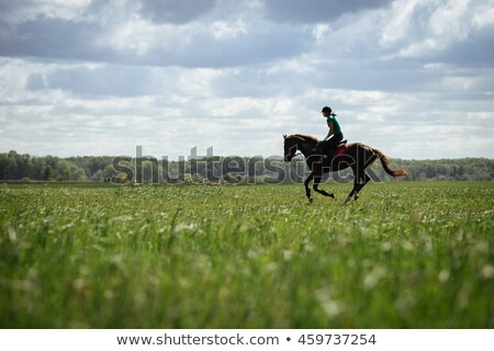 young woman training horse outside in summer stock photo © juniart