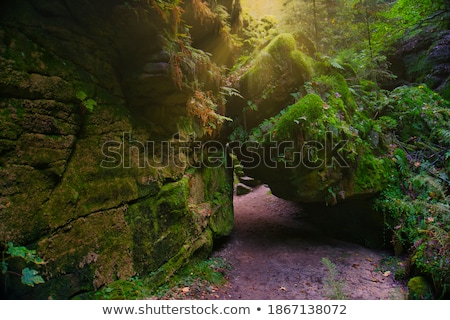 Forest in Saxon Switzerland Stock photo © w20er