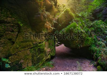 forest in saxon switzerland stock photo © w20er