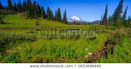 Little Mount Rainier Sunrise Wildflowers Snow  Stock photo © billperry