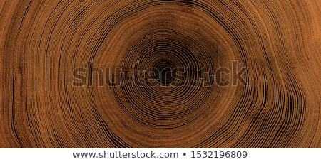 stump of oak tree in forest Stock photo © meinzahn