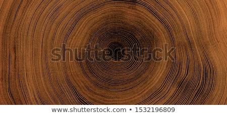 stump of oak tree in forest stock photo © meinzahn