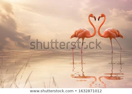 Paire deux vieux monde manger lac Photo stock © danielbarquero