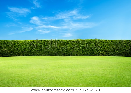 New green grass in the garden for background stock photo © yanukit