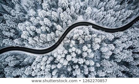 Kış yol Litvanya gökyüzü orman doğa Stok fotoğraf © Bumerizz