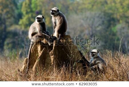Termites - black and white Stock photo © cteconsulting