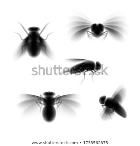 különböző · rovarok · sziluettek · pók · méh · légy - stock fotó © Slobelix