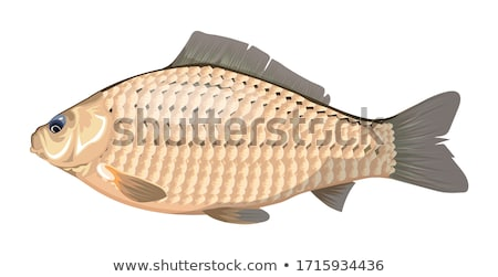 Fish Head At Market Stock photo © searagen