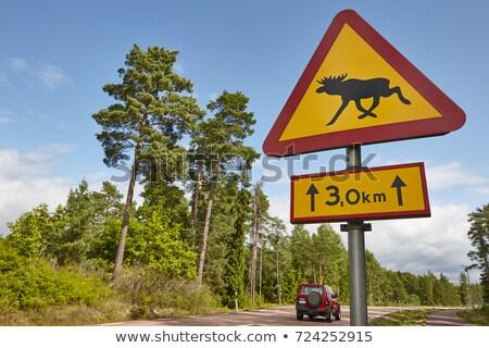 ムース 警告 農村 旅行 トラフィック ストックフォト © olandsfokus