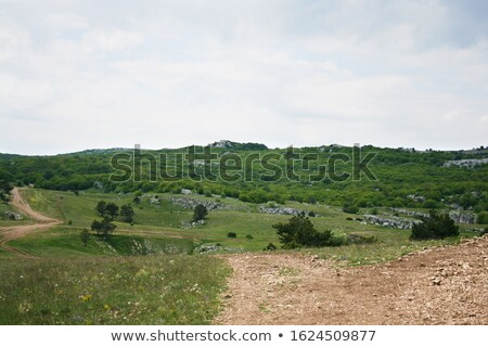 Green Summer Pine on the Meadow and High Mountains on Background. Crimea, Ukraine Stock photo © maxpro