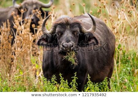 Wild afrikaanse afrika twee Kenia gezicht Stockfoto © master1305