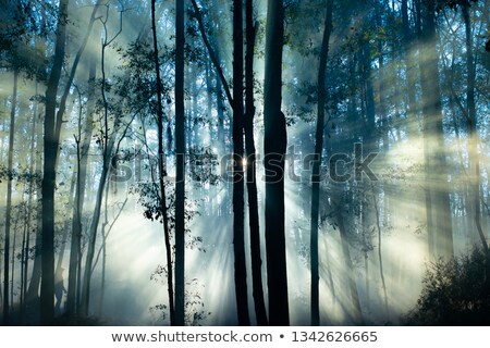 UFO in a landscape of misty forest at sunrise Stock photo © michaklootwijk