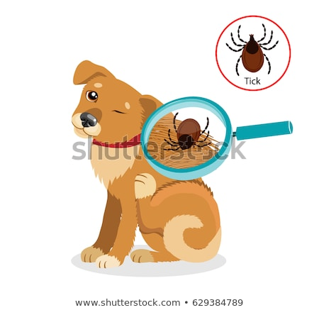 Pet Tick Stock photo © Lightsource