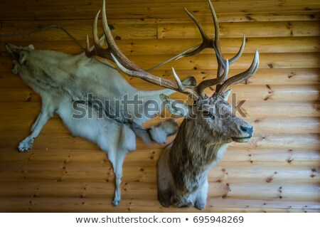 deer head trophy collection on a wooden wall stock photo © art9858