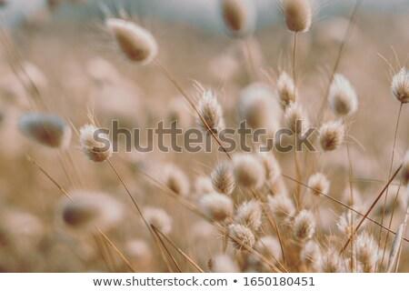 vacaciones · hierba · creciente · mar · verano · azul - foto stock © tilo