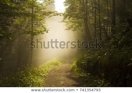 Stock fotó: Road Trough A Green Foggy Forest