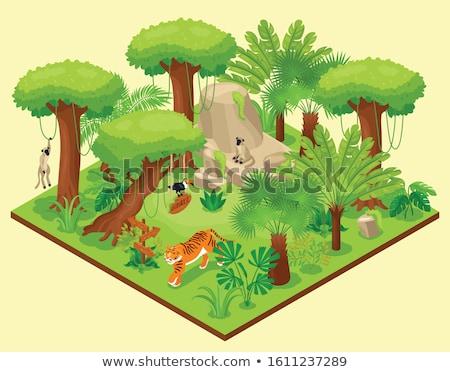 Wild varen tropische wildernis gezonde groene Stockfoto © pzaxe