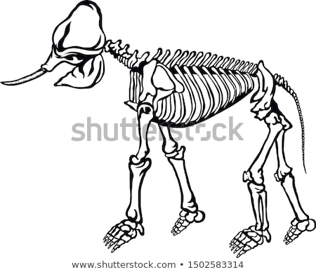 Skeletal System of an Elephant Stock photo © bluering