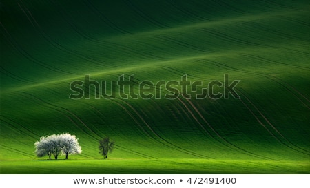 Sunny landscape background of Tuscany countryside Stock photo © Taiga