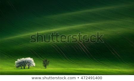 晴れた 風景 トスカーナ 道路 木 ストックフォト © Taiga