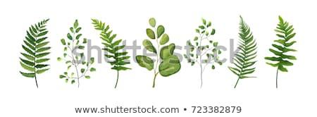 yeşil · eğreltiotu · yaprak · yalıtılmış · beyaz · doğa - stok fotoğraf © homydesign