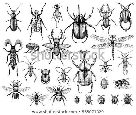 Haşarat böcek vektör toplama kelebek hayvanlar Stok fotoğraf © robisklp