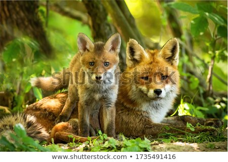 Photo stock: Famille · rouge · forêt · illustration · couple · animaux