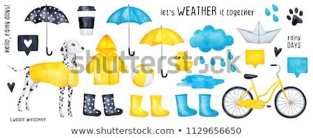 Rainboots Set Stock photo © adamson