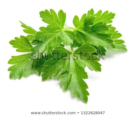 свежие петрушка листьев разделочная доска здорового Сток-фото © Digifoodstock