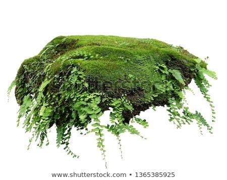Yosun eğreltiotu güzel yeşil bahar orman Stok fotoğraf © ondrej83