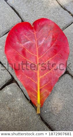 лист тротуаре аннотация Сток-фото © IS2