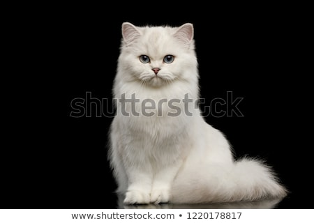 Cauda branco gato Foto stock © IS2