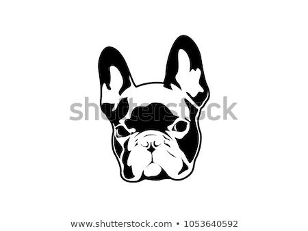 isolated black outline head of french bulldog on white background line cartoon breed dog portrait stock photo © olkita