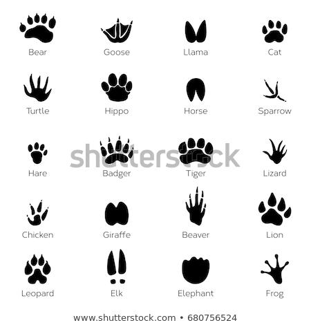 Ayarlamak ayak izleri vahşi hayvanlar örnek siyah siluet Stok fotoğraf © ratkom
